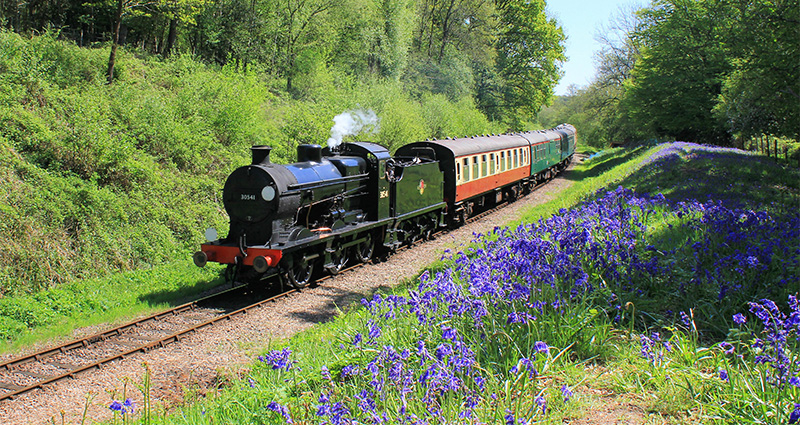 train driving past bluebells